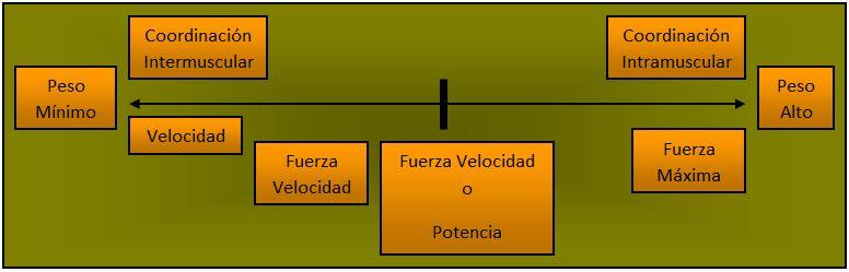 Entrenamiento Fuerza Coordinacion intermuscular intramuscular